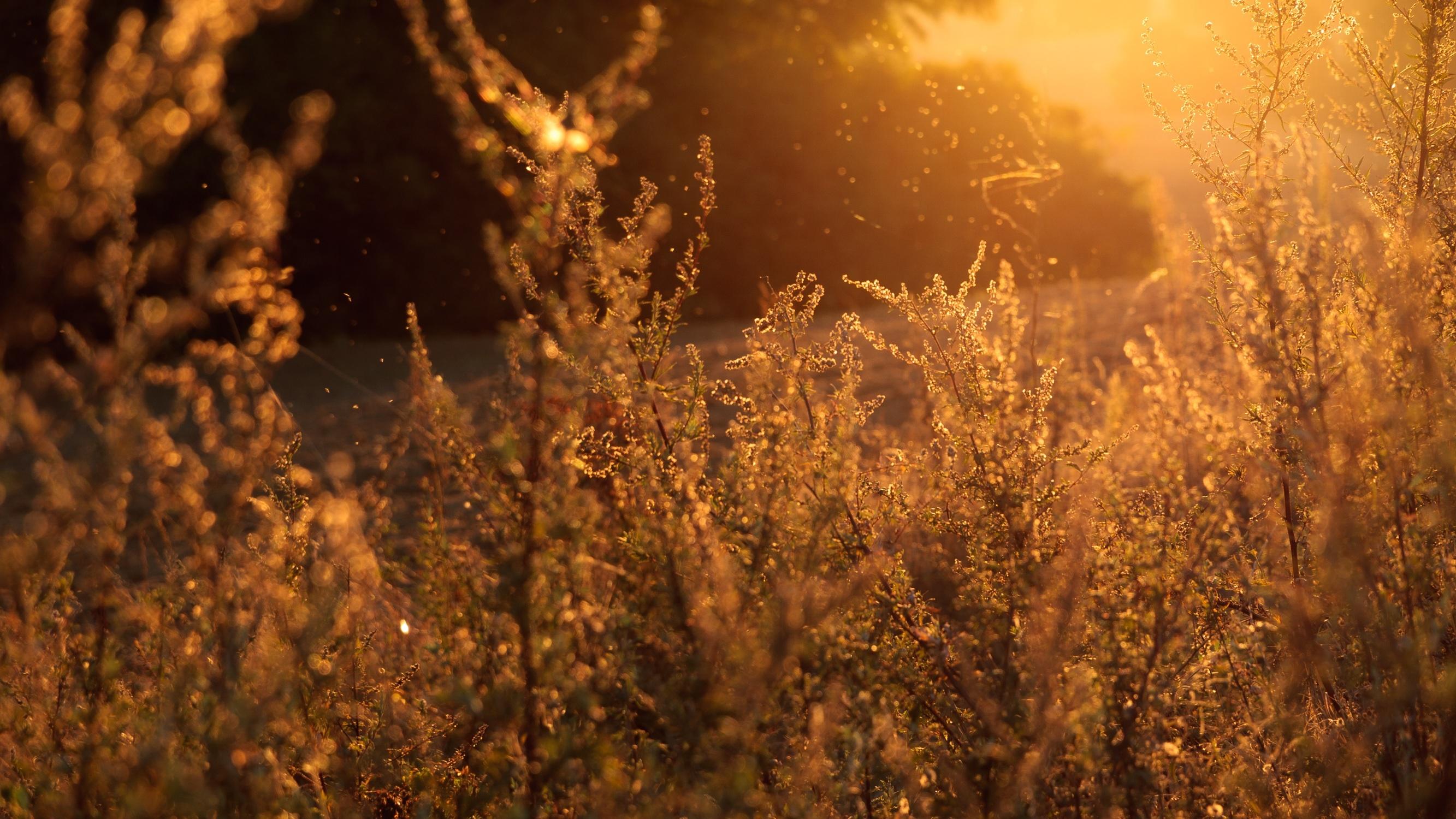 Amélioration de la production biologique nordique de grains de spécialité par le développement d'un plan de contrôle efficace de la pression des mauvaises herbes adapté aux conditions agroclimatiques et aux pratiques du Saguenay-Lac‐Saint‐Jean.