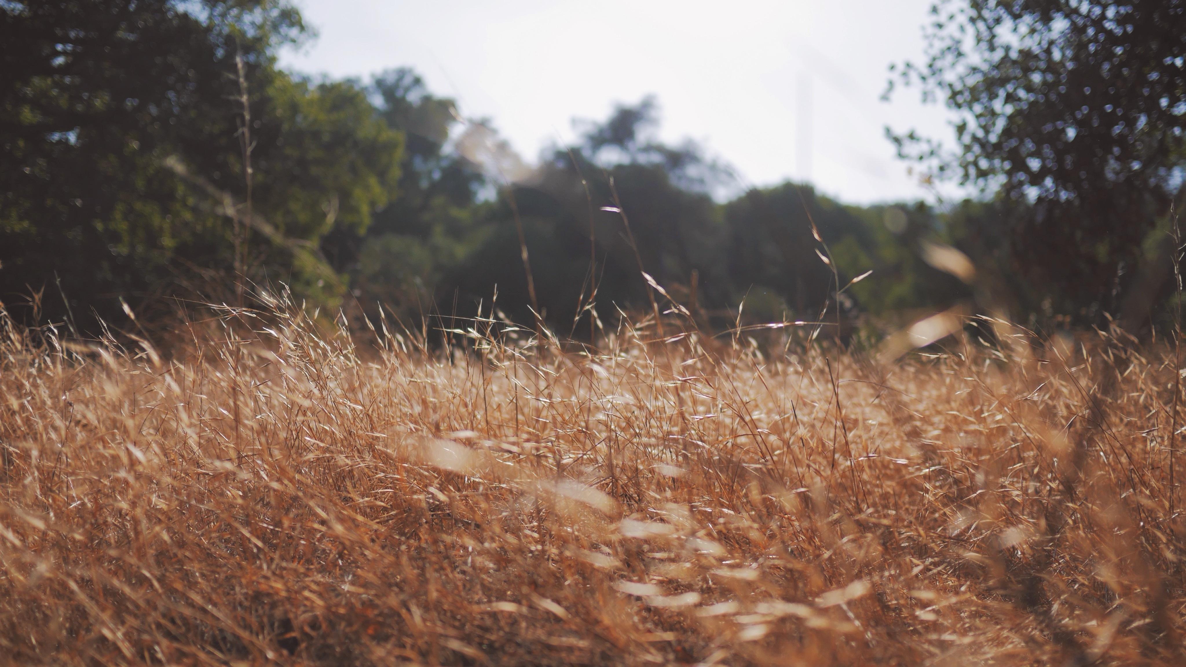Jardins agroforestiers 02