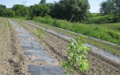 Lancement Jardins agroforestiers 02