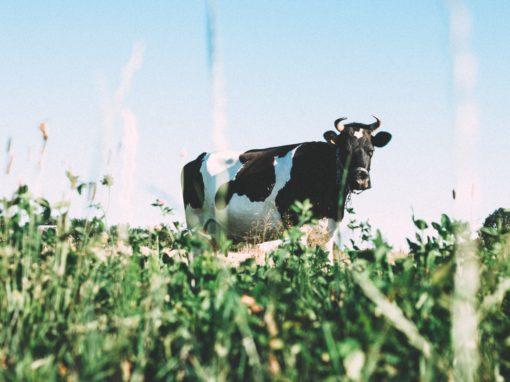 Évolution de la valeur nutritive au cours de la saison de croissance du fourrage cultivé en région nordique