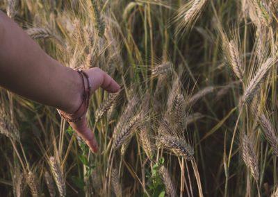 Formation continue en agriculture nordique