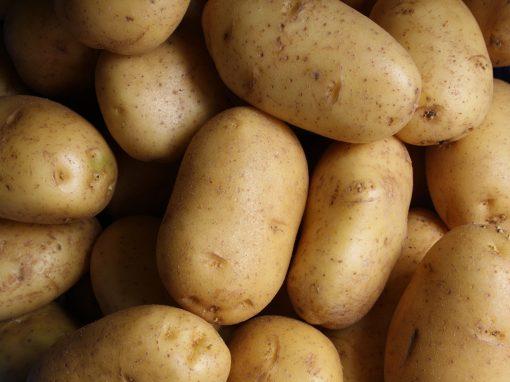 Développement d'une nouvelle stratégie de traitement contre la gale commune de la pomme de terre basée sur l'utilisation de produits phytogènes de la zone boréale