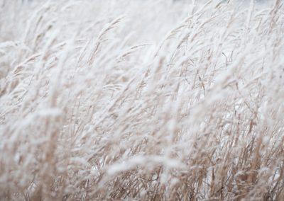 FRAN-02 – Fonds de recherche agroalimentaire en agriculture nordique
