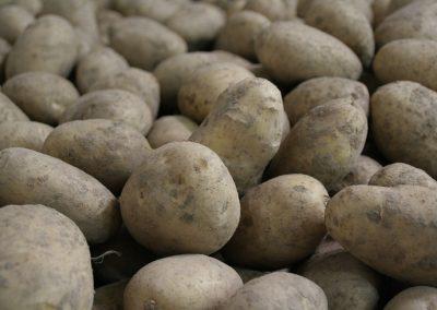 Développement des marchés d'exportation pour la pomme de terre de semences